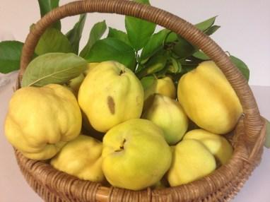Market fresh quinces