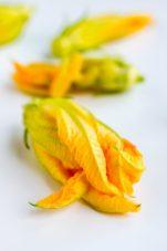 zucchiniblos-5