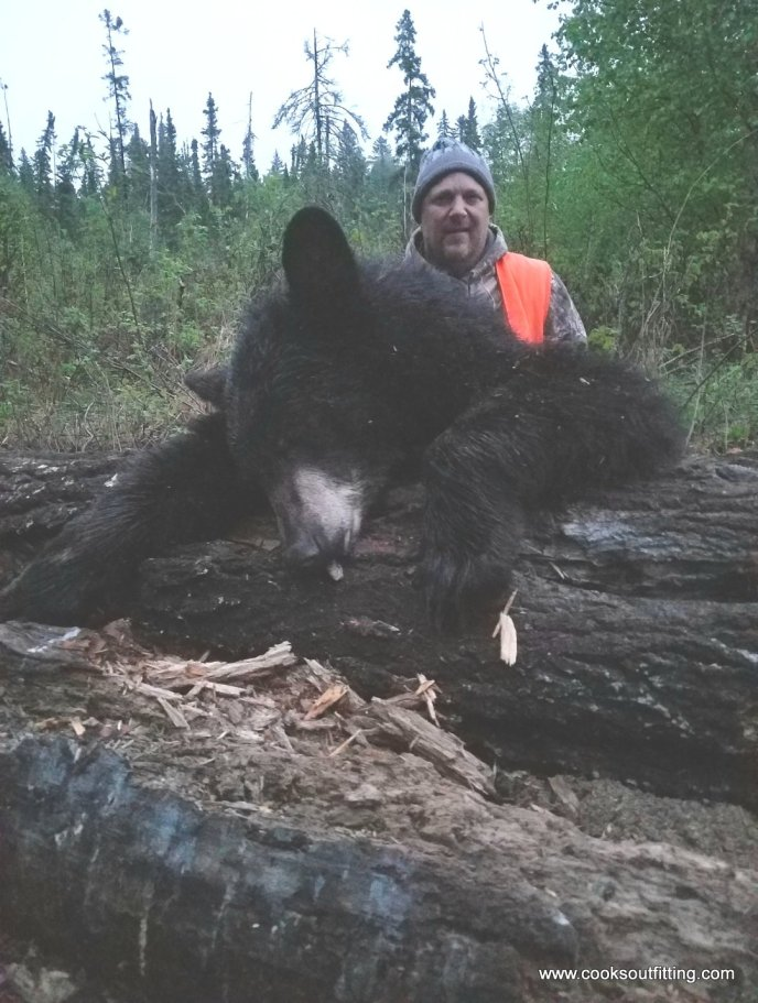 bear-hunts-canada (2)