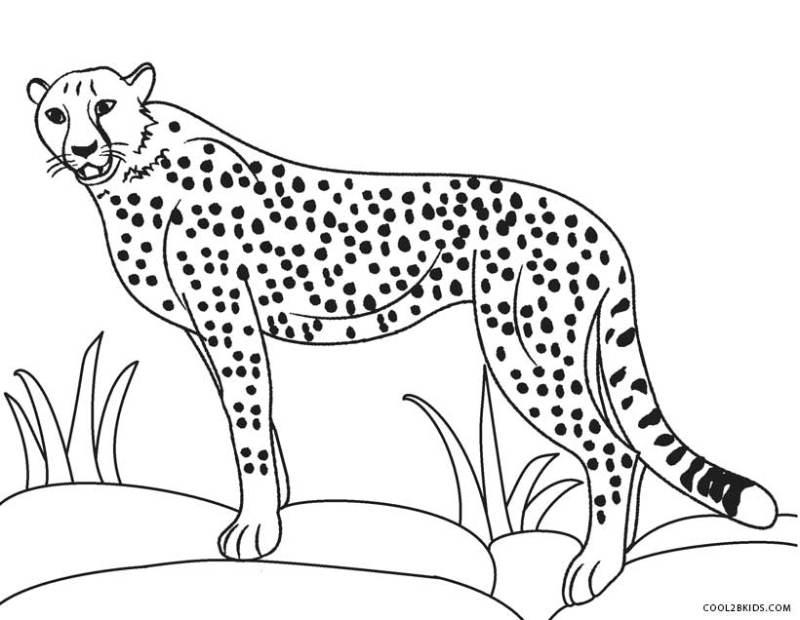 100 images picture of cheetah to color Cheetah Coloring Page