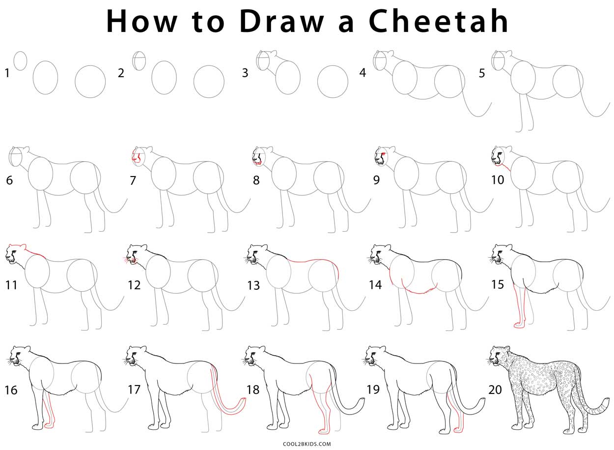 How To Draw A Cheetah Step By Step Pictures