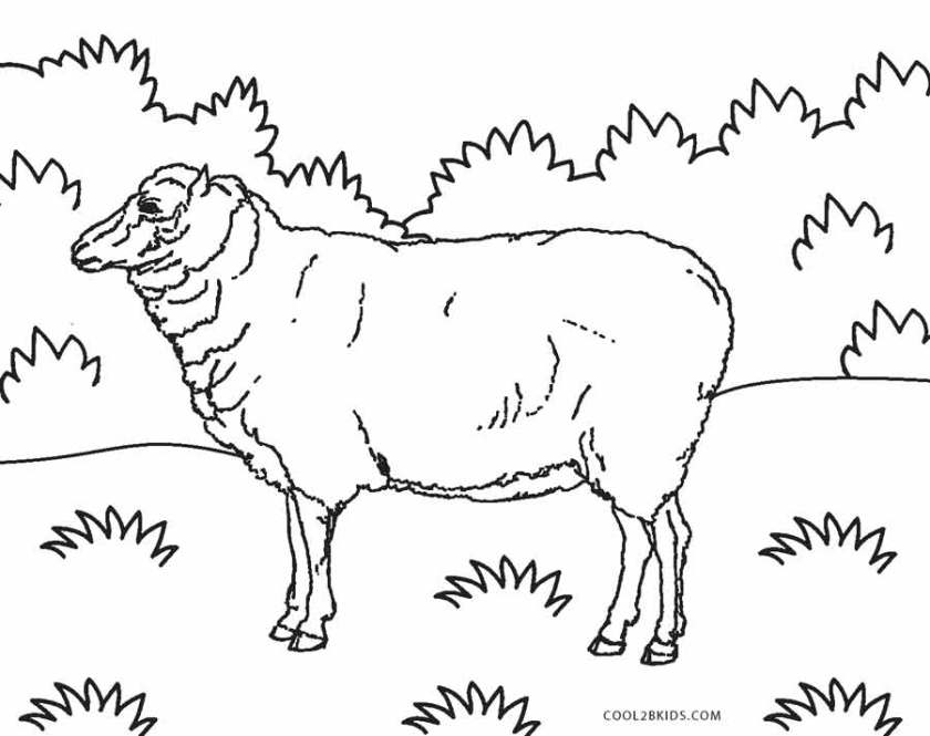 free printable sheep face coloring pages for kids  cool2bkids