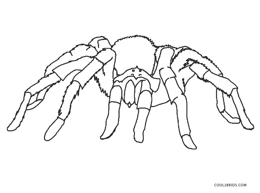 Free Printable Spider Coloring Pages For Kids Cool2bKids