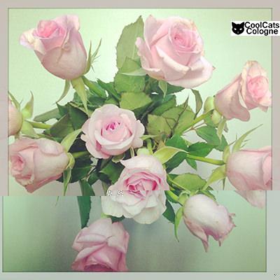 rosen braut