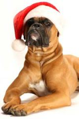 Christmas-DogWithSantaCap