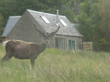 ardoch-bothy-and-stag