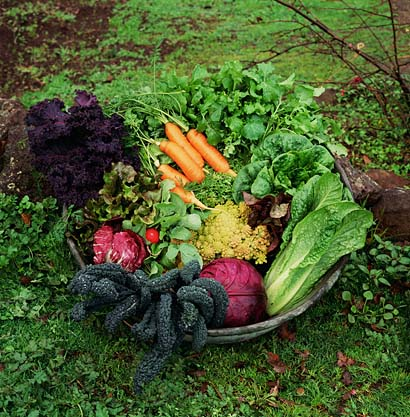Image Result For Grow Your Own Fruit And Veg In Pots