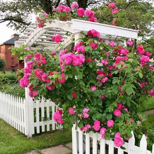 Best Garden Landscape Design Software