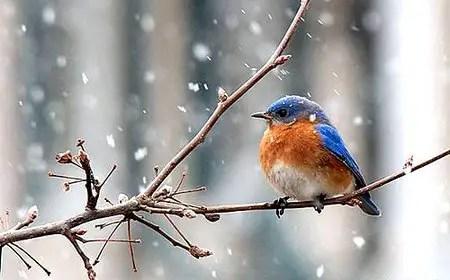 birds-winter