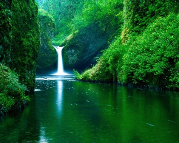 Lovely Fresh Nature Background Wallpaper | Download cool ...