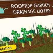 Thumbnail voor een infographic over een tuintje op jouw dak.