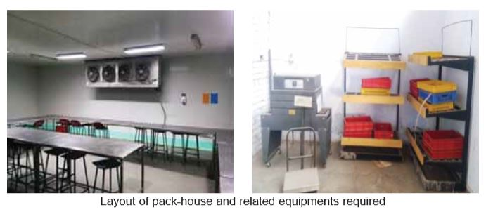 Design of Cold Storage for Fruits & Vegetables - Cooling India