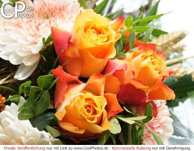 CoolPhotosde Grukarten Blumen Blumenstrue