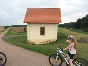 Deichlandschaft vor dem Wörlitzer Park