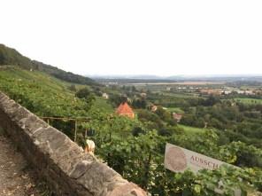 Blick vom Weinberg in Pillnitz