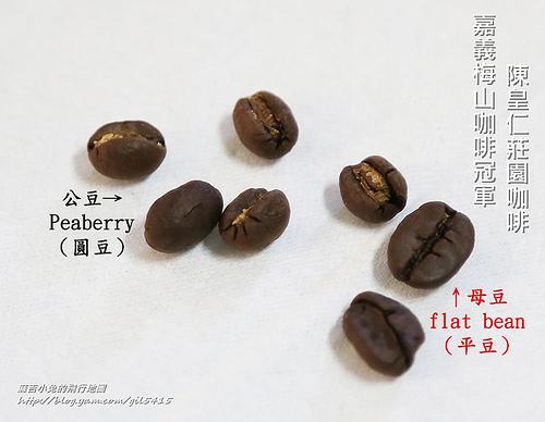 公豆&母豆