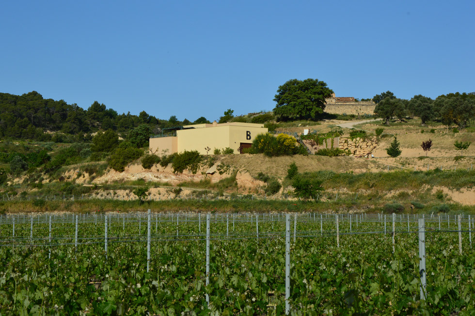 Terra Alta | Tierra de vinos con DO propia