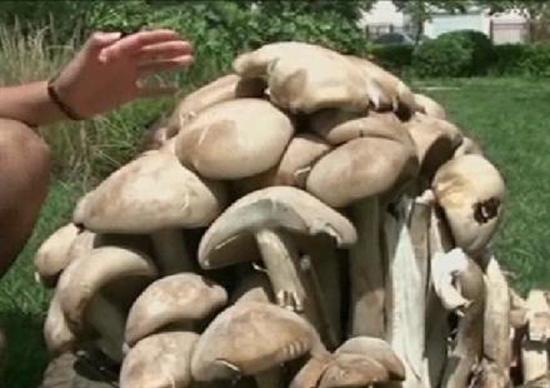 Oregon Mushroom 200 2 Largest Acres