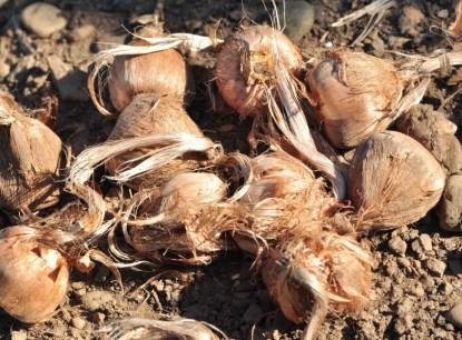 safran-cultive-8