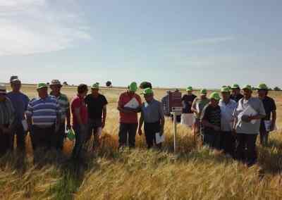 Ensayo de variedades de cultivos de invierno en siembra directa en secano