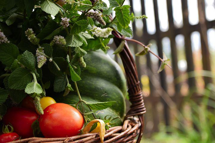PROGETTO Verde | Vuoi comprare i prodotti del nostro Orto o adottare un Olivo?