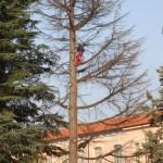 Abbattimento, potatura e trattamenti alberi