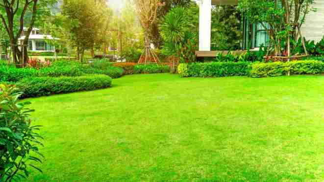 Giardinaggio | Qual è il momento migliore per annaffiare