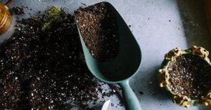 Riprodurre le piante in casa dalla A alla Z