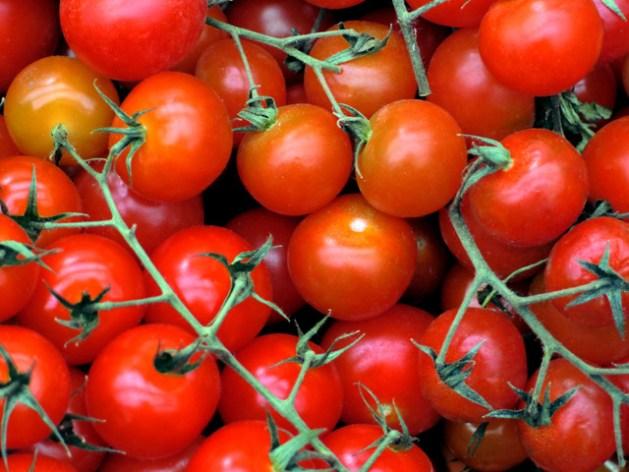 pomodoro italia