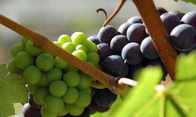 Da oggi in vigore il Testo Unico del Vino