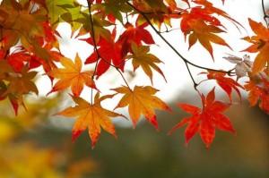 Octoberriffic