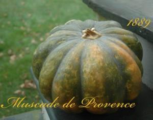 provence-squash-lg