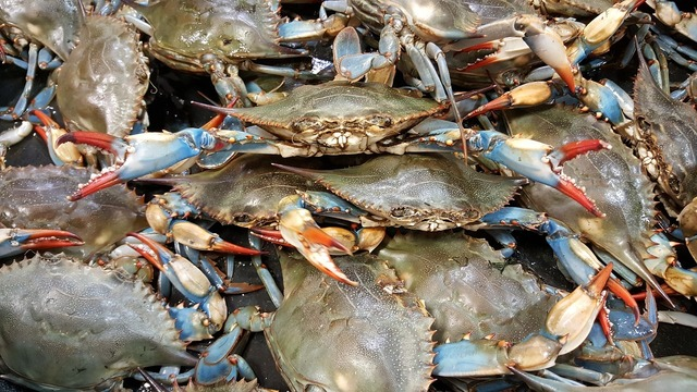 2019 Maryland blue crab season officially begins