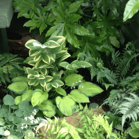 arboretum cooper young