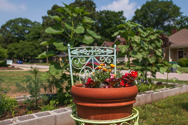 Garden To-Dos for September