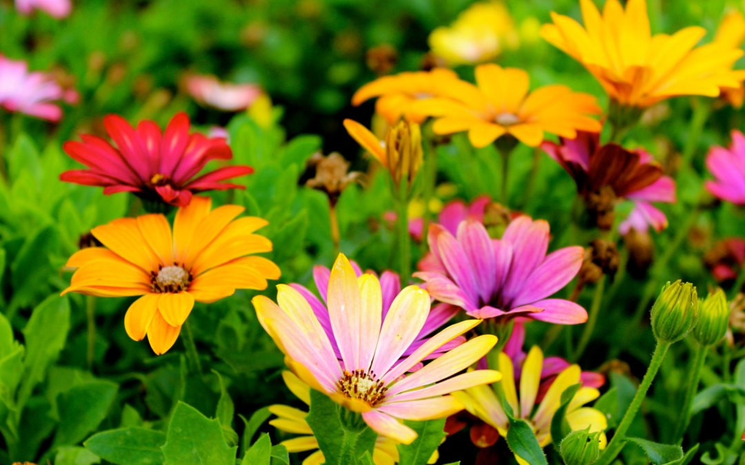 colorful flowers cooper-young