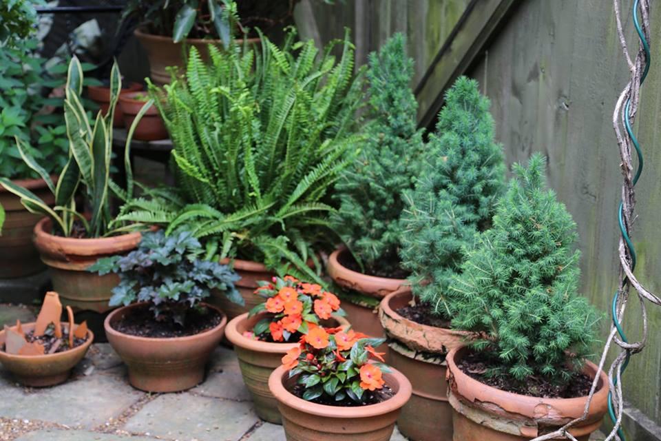 Houseplant Appreciation Day-Jan 10.