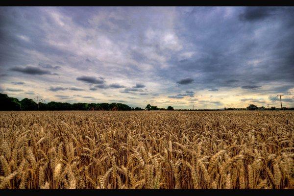 des terres agricoles hors bail rural