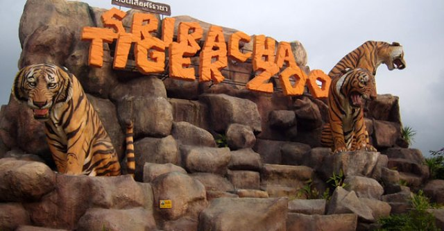 Sriracha Tiger Zoo, book this and other great attractions at the Copa Hotel Pattaya Tour Desk