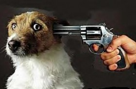 Puppycide in Fulton, MO