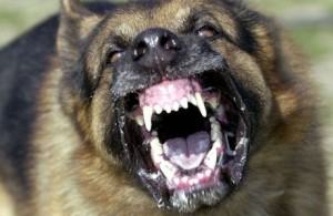 Police Attack-Dog Mauls Man During Warrantless Search of Private Property