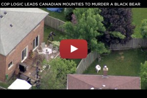 Cop Logic Leads Canadian Mounties to Murder a Black Bear (VIDEO)