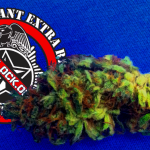 Why Is There All of This Marijuana Stuff On Cop Block's Facebook Page?