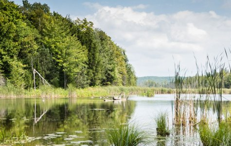 Copeland Wetland scene