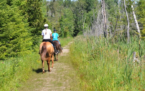 Horseback Riders on the 3rd line of Copeland Forest