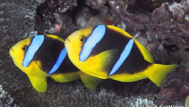 Diveaway Fiji on Coral Coast, Fiji