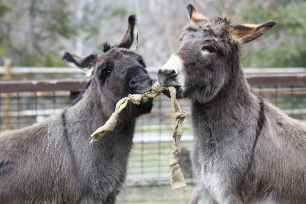 Asheville North Carolina Travel Guide - Nature Center Sicilian Donkeys