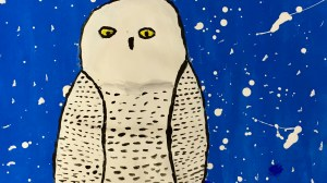 More Snowy Owls!