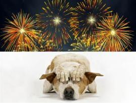 scared dog of fire works