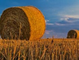 agricoltura grano